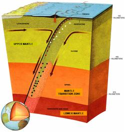 This illustration depicts a tectonic plate as it is subducted.  The dots on the image illustrate likely earthquake activity.  The boundaries of the transition zone can be seen to deflect upwards and downwards because of the altered temperature/pressure pr