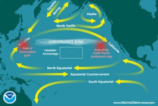 term paper on the pacific gyre trash The north pacific ocean is home to the north pacific subtropical gyre page 2 the great pacific garbage patch essay tiffany from new york essays.