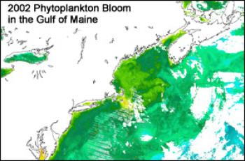 2002 Phytoplankton Bloom