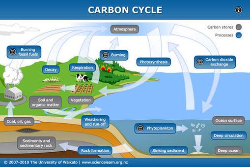 Hd Wallpapers Carbon Cycle Diagram Gcse Ci3dimobile
