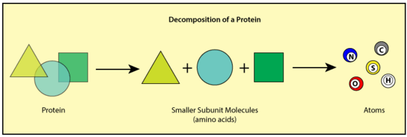 Decomposition of a protein