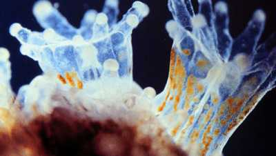 relationship between zooxanthellae coral polyps cartoon