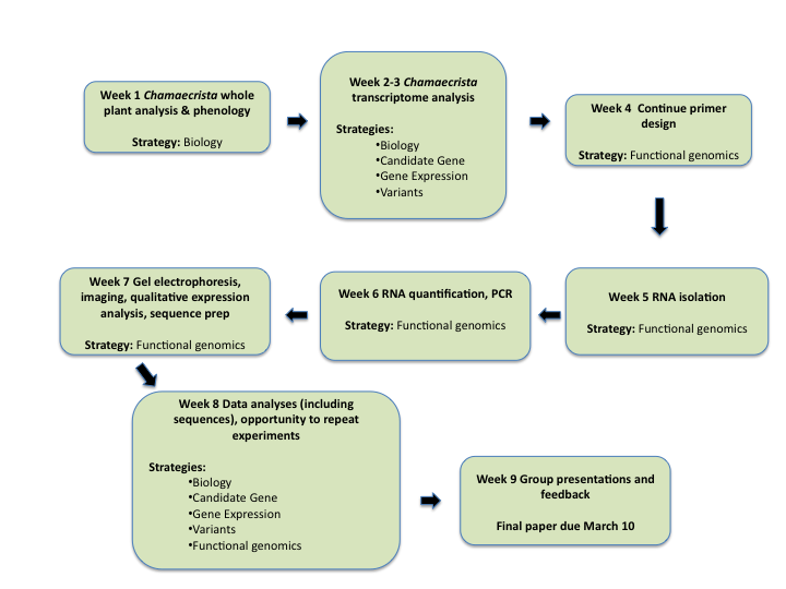 2011 Flow chart for lab activities