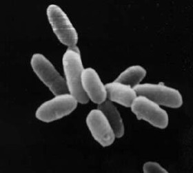 Halobacteria resistant to radiation