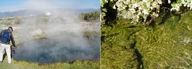 Picture of a large hot spring and a green flowing mat