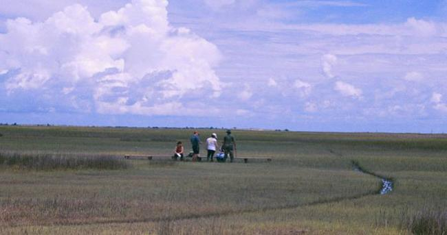 Students in the open marsh