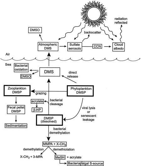 Scheme representing the mechanisms of DMSP and DMS cycling in the marine water column and atmosphere.