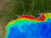 Summertime satellite observations of ocean color from MODIS/Aqua show highly turbid waters which may include large blooms of phytoplankton extending from the mouth of the Mississippi River all the way to the Texas coast.