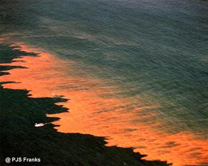 Dramatic photo of California Noctiluca red tide bloom