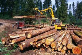Logging in Idaho.